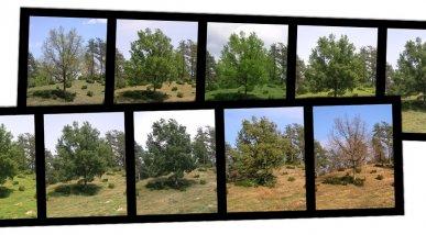 Foto estacional arbre