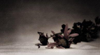 Fotografia flor per poema