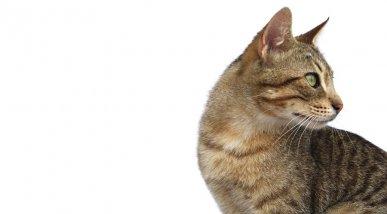 Foto publitària gat 2 Dingo Natura